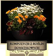 Kompozycje z roślin doniczkowych